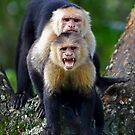 Capuchin Photobomb - Costa Rica by Jim Cumming