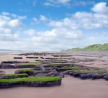 slimey green mud banks at Beal beach by morrbyte