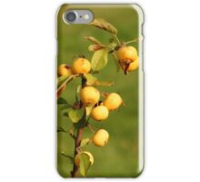 Ripening Fruit iPhone Case/Skin