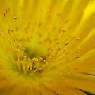 Golden Burst by Bev Woodman