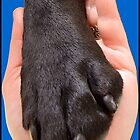 Black Dog Paw In Hand by amanda metalcat dodds