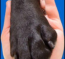 Black Dog Paw In Hand by amanda metalcat dodds