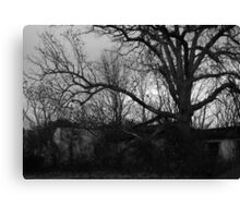 Abandoned building with tree taking over Canvas Print