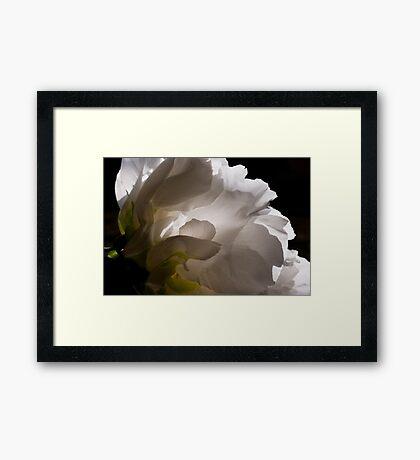 White Tree Peony Framed Print