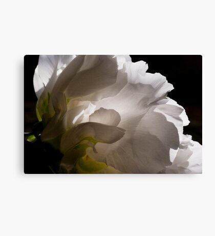White Tree Peony Canvas Print