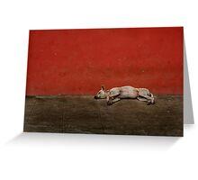Sleeping Dogs Lie Greeting Card