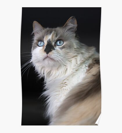Blue Eyed Mia Poster