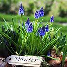 Close to Spring by Jo Nijenhuis