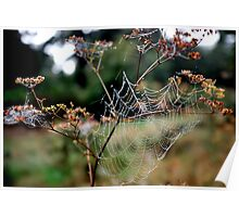 Web in the Forest Poster