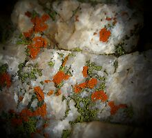 Lichen on Quartz by CarolineKruger