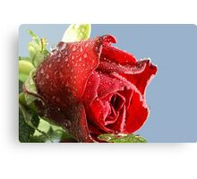 Red rose with droplets Canvas Print