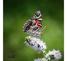 You're My Butterfly Photographic Print