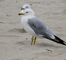 Gulls by Dan Perez