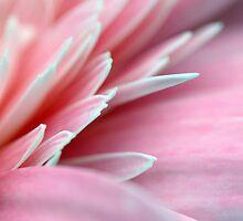 Pink Peddles by DiEtte Henderson