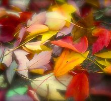 Colorful leaves of Autumn by Pahl