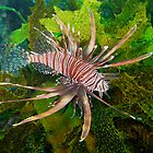 Lionfish by Edjamen