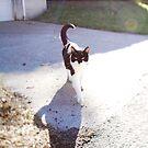 Cat by sara montour