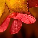 Hanging on to Autumn by Matthew Tauzer