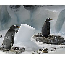 We Made It Ourselves, Honest (Penguins with Ice Column) Photographic Print