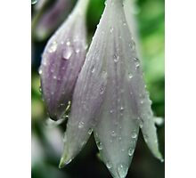 Raindrenched Photographic Print