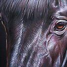 Black stallion by Elena Kolotusha
