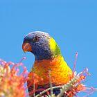 Rainbow Lorikeet by Melva Vivian