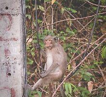 Monkey Business by Oliver Koch