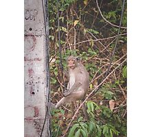 Monkey Business Photographic Print