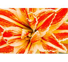 Hippeastrum Flower - Lava Red Photographic Print