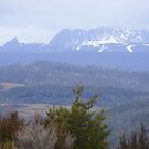 Cradle Mt viewed from above the Vale of Belvoir, Tasmania by gaylene