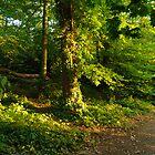 Sunlight Through the Trees by DonDavisUK