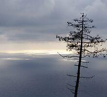 Lone Pine and the Ligurian Sea by Chris van Raay