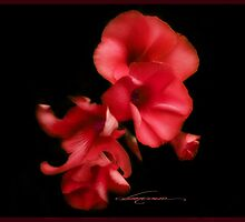 blossom red by dimarie