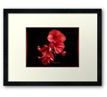 blossom red Framed Print