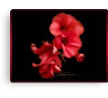 blossom red Canvas Print