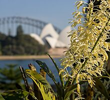 Rock Lily with the Opera House by lovethrugrace