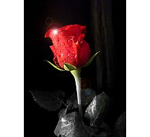 Red Rose 1 Photographic Print