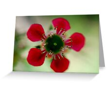 Sweet Geraldton Wax Greeting Card