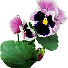 Pansy Mother and Child by Susan Savad