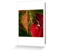 Territorial grasshopper Greeting Card