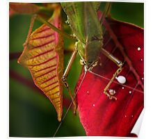 Territorial grasshopper Poster