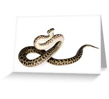 Spotted Python (Antaresia maculosa) Greeting Card