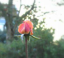 Enchanted Garden - The Rose by HELUA