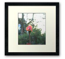 Enchanted Garden - The Rose Framed Print