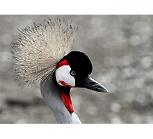 African Crane at Lake Tobias Photographic Print
