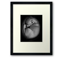 ADORABLE SLEEPING PUPPY!  Framed Print