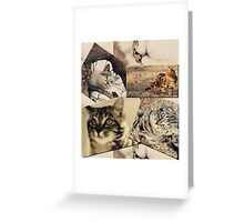 Cat collage Greeting Card