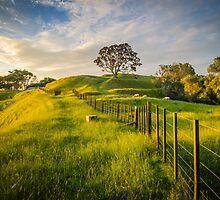 One Tree Hill by Ian Rushton