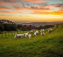 Sheep on One Tree Hill by Ian Rushton