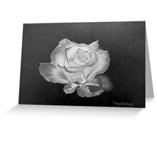 Rose in Graphite Pencil Greeting Card